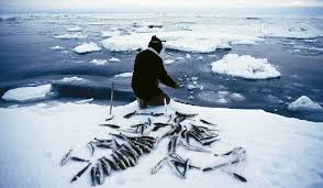 Tip 3: In An Arctic Landscape, Get To Sea Ice