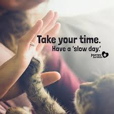 Have a Slow Day