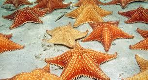 Act like a sea star
