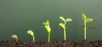 The Optimal Rate of Growth focuses on small wins